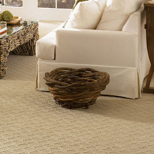 Contempo Carpet 1